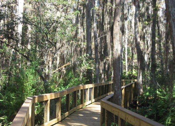Loxahatchee National Wildlife Refuge - Boynton Beach, FL, USA.