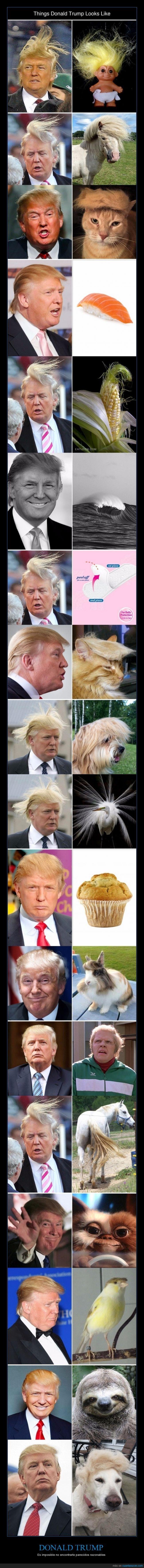 Los 1001 parecidos razonables de Donald Trump - Es imposible no encontrarle parecidos razonables