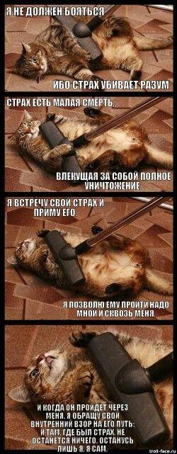 Страх кота