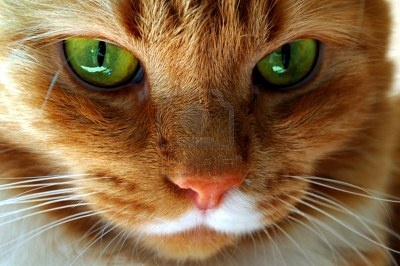 Red cat green eyes... Milk mustache :)