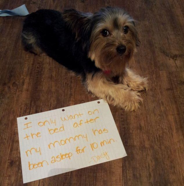 51 Best Ashamed Dogs