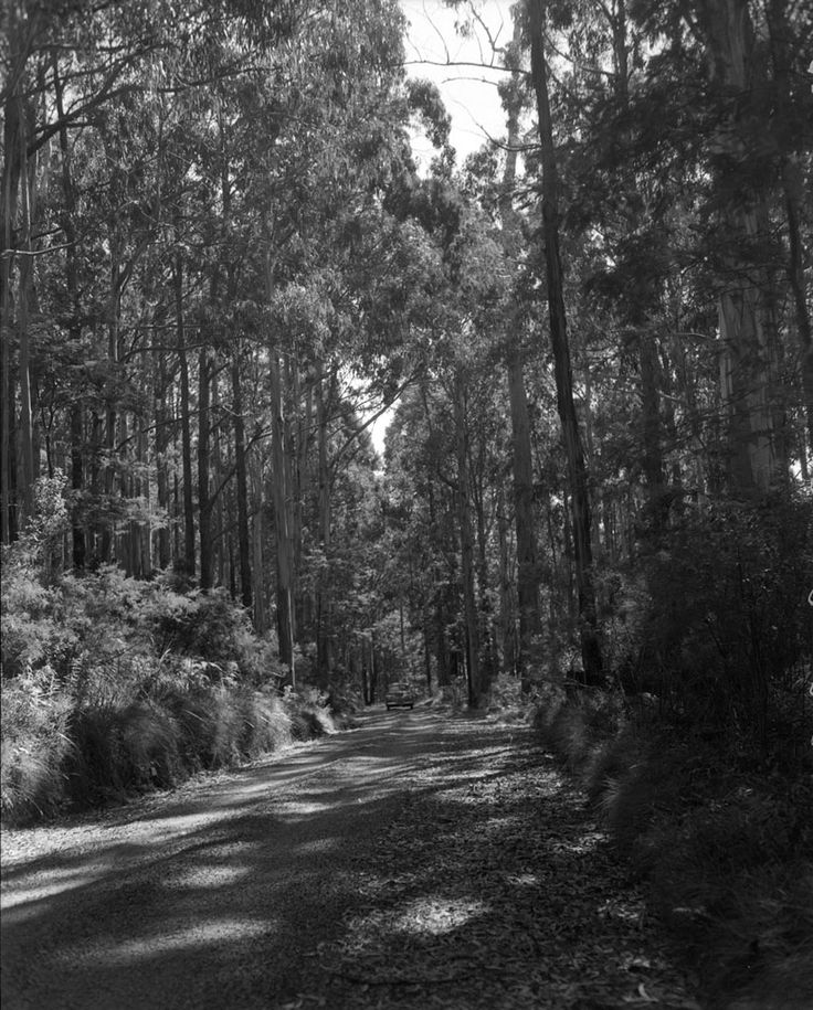 1953 Donna Buang Road west of Mount Donna Buang. Upper Yarra. www.vicroads.vic.gov.au/centenary