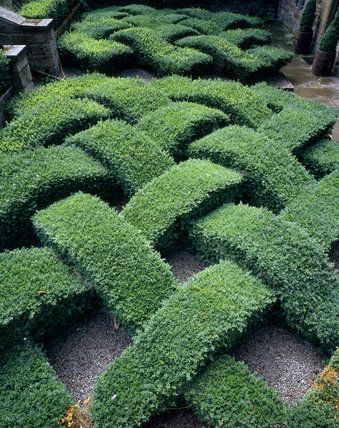 23 best images about knot gardens and topiaries on for Knot garden designs herbs