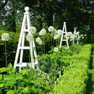 Wooden garden obelisks.  How about a couple of these beauties - they come in a huge range of paint shades and add height and interest to any planting scheme.  Gorgeous with climbing roses and Clematis.