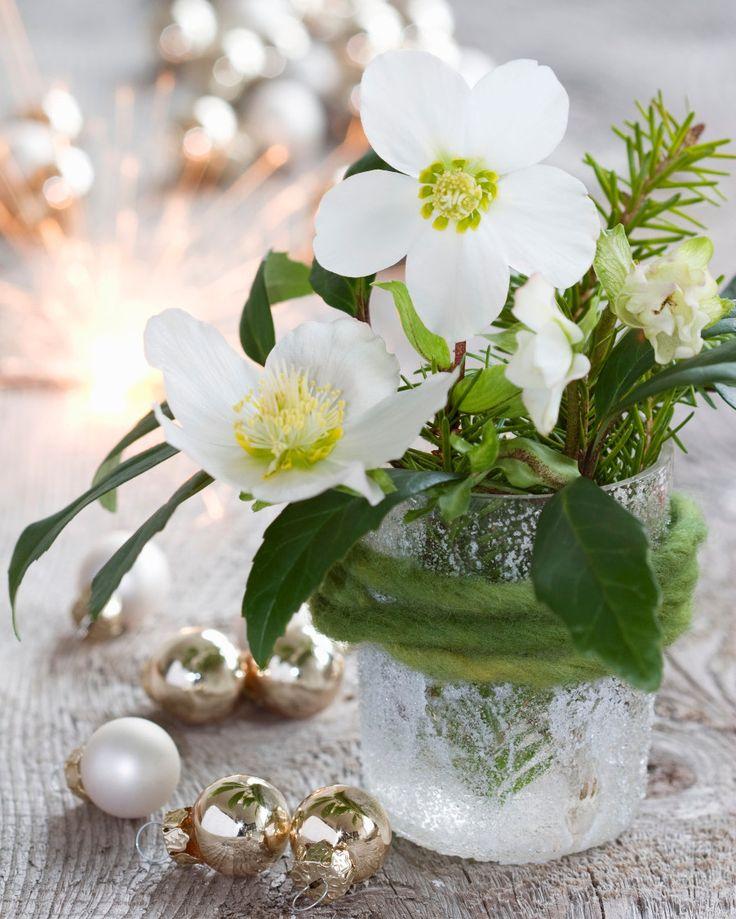 Ber ideen zu christrose auf pinterest amarylis - Winterliche dekoration ...