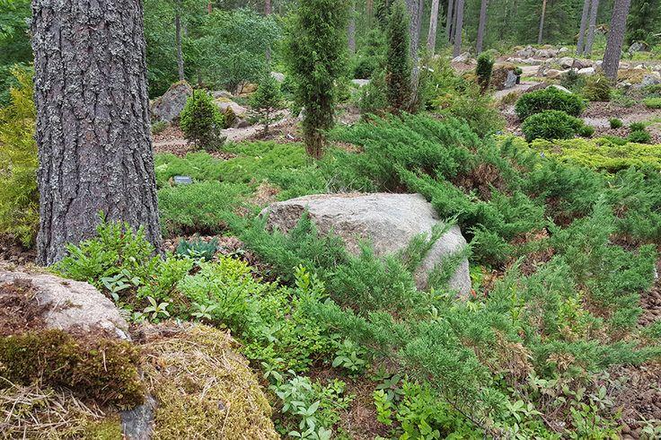 Metsäpuutarha on paras muokata keskikesällä kun alkukesän kasvusto on helposti raivattavissa. Usein hoidetun pihan ja metsän raja muodostuu turhan jyrkäksi, joten sitä on hyvä pehmentää hoitotoimenpitein.