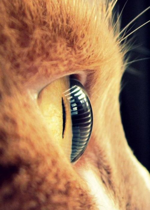 Amazing detail, and I have always loved the way a cat's eye looks from the side.