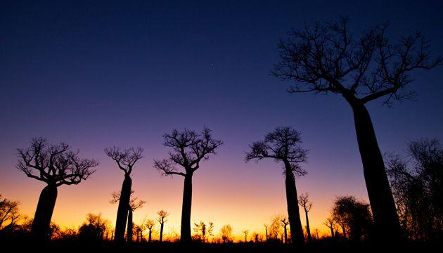 Shane İle Vahşi Yaşam: Madagaskar Hayaletleri