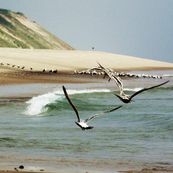 Cape Cod National Sea Shore: Seagulls Over Cape Cod National Seashore, Wellfleet, MA