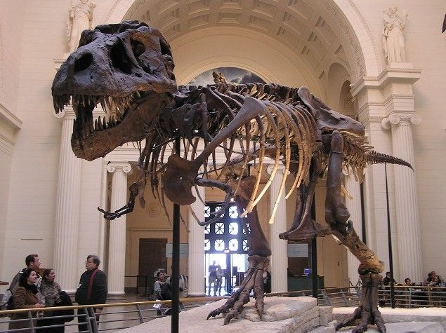 Sue The Largest Most Complete Best Preserved T Rex