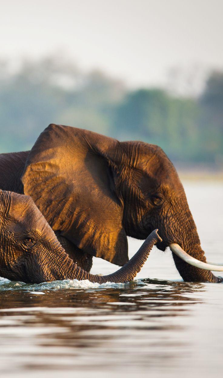 27 Best Luxus Safari Afrika Sambia Images On Pinterest Et Tour Le Morne Horseback Riding Chongwe Haus Time Tide Arika Fluss