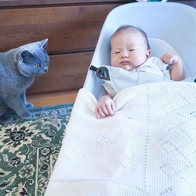 Yaha meets human baby👶 やはたん産まれて初めての、赤ちゃん御対面✨ 優しいやはたん、赤ちゃんが泣いたら走って様子見に来る💛 新たな一面を見て、嬉しいママでした👩  #life #愛 #bae  #ブリティッシュショートヘア #ブリショー #britishshorthair #paw #springishere #cat #catstagram #kitty #kittycat  #cutiepie #cutie #love #もふもふ #ふわもこ部  #baby #angel #天使  #愛猫 #こんもり #まんまる  #かわいい #激かわ #甘えんぼ #キューティーハニー #猫と赤ちゃん