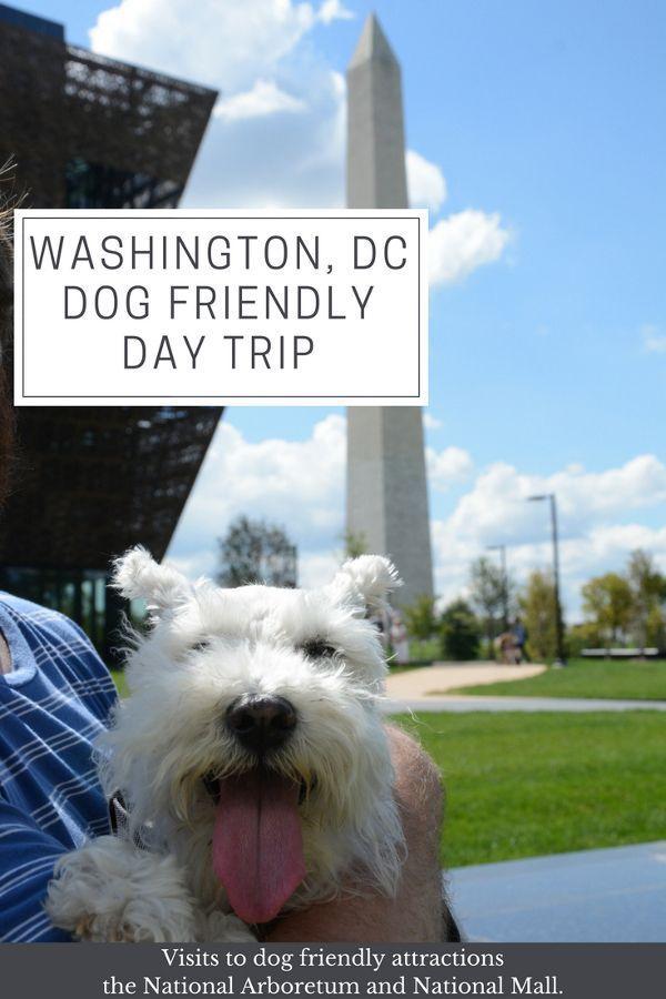 Washington Dc Dog Friendly Day Trip Reverberations Dog Friendly Vacation Washington Dc Travel Dog Friends