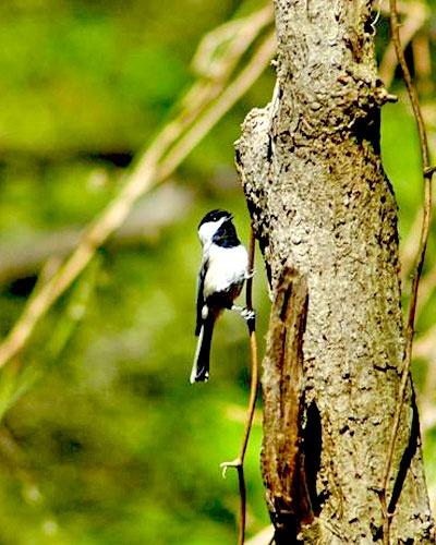 Birding at Holts Landing