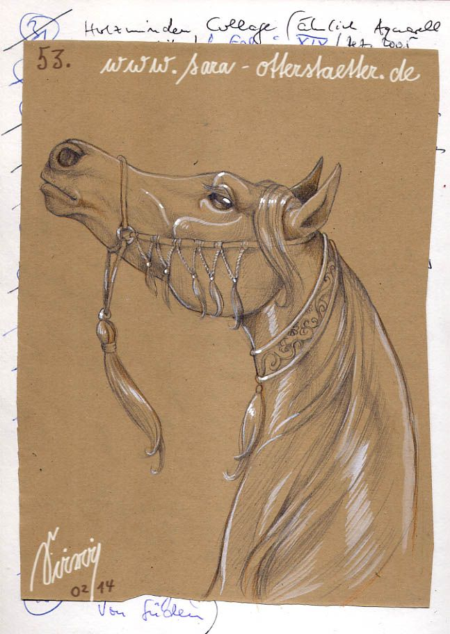 Pencil drawing of an arabian horse. I added white gouache abd white gel pen for the light effects.