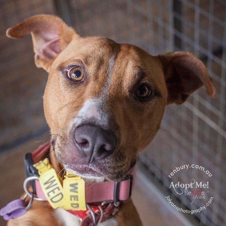 Duke got adopted! | by Jo Lyons Photography