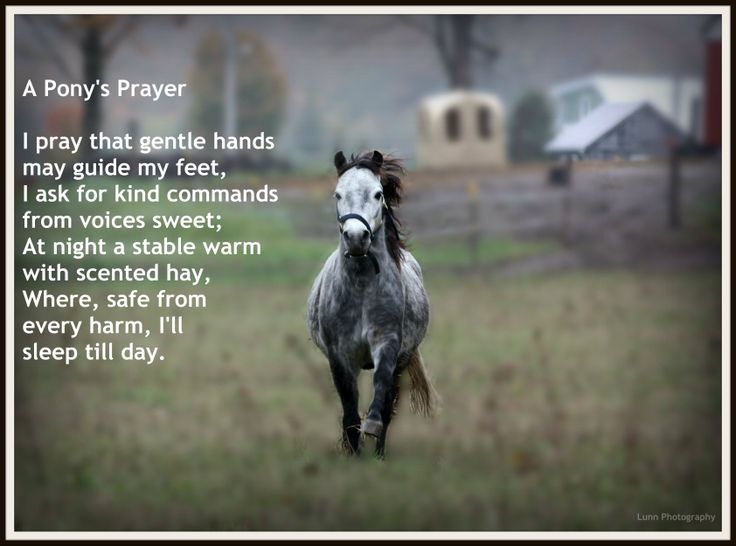 A Pony's Prayer Inspirational Horse Quote Horse quotes