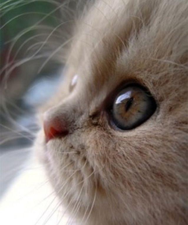 Awwwww, what a big eyed beauty…..