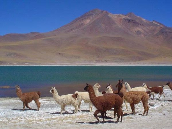 Atacama Desert, Northern Chile