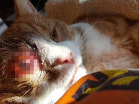 A SHOCKED cat lover has told how her pet was left with an eye bulging out of its socket after being shot by a thug with an air gun.