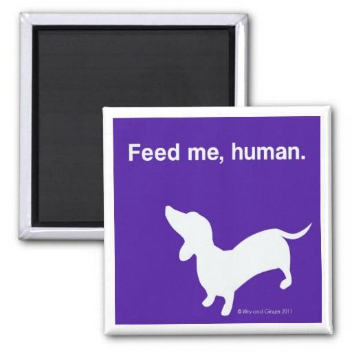 >>>The best place          Doxie Feed Me Magnet           Doxie Feed Me Magnet we are given they also recommend where is the best to buyHow to          Doxie Feed Me Magnet today easy to Shops & Purchase Online - transferred directly secure and trusted checkout...Cleck Hot Deals >>> http://www.zazzle.com/doxie_feed_me_magnet-147933133897364113?rf=238627982471231924&zbar=1&tc=terrest
