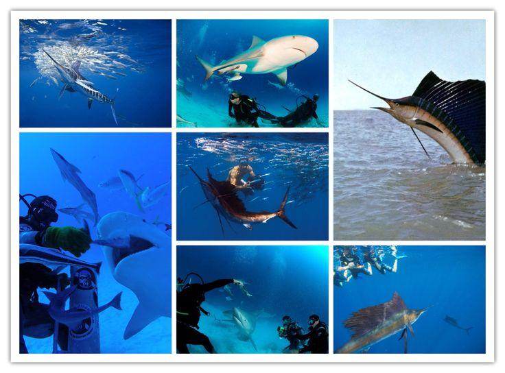 Ecoturismo / Turismo sustentable... ☺️ con www.playaservice.com