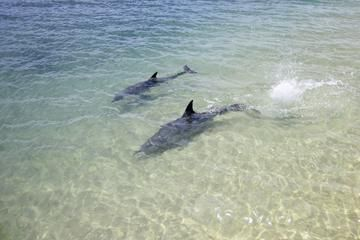 3-Day Monkey Mia Dolphins, Pinnacles Desert and Kalbarri National Park Tour from Perth