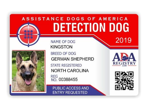 Detection Emotional Support Dog Yorkie Names Service Dog Registration