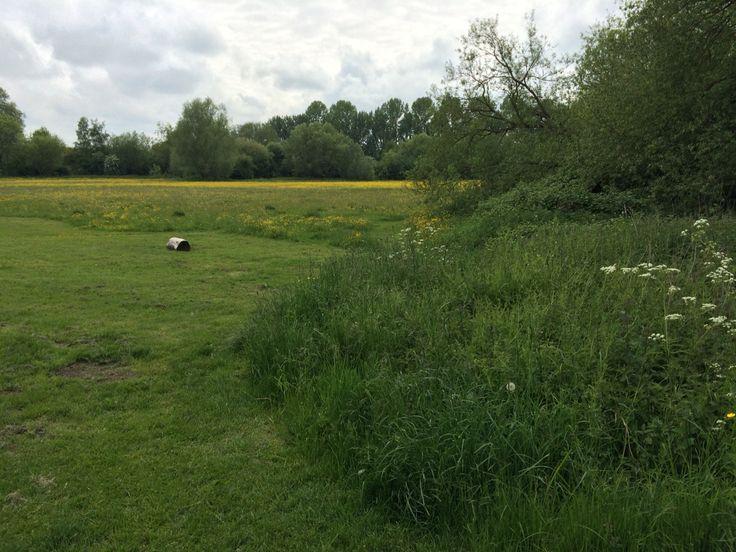 Natuurlijk groen in oxford