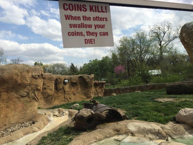 That this dont feed coins to the otters sign even needs to be a thing at my local zoo.