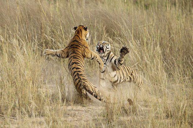 National Geographic elige las 19 mejores fotografías de 2014 | Tendencias | LA TERCERA
