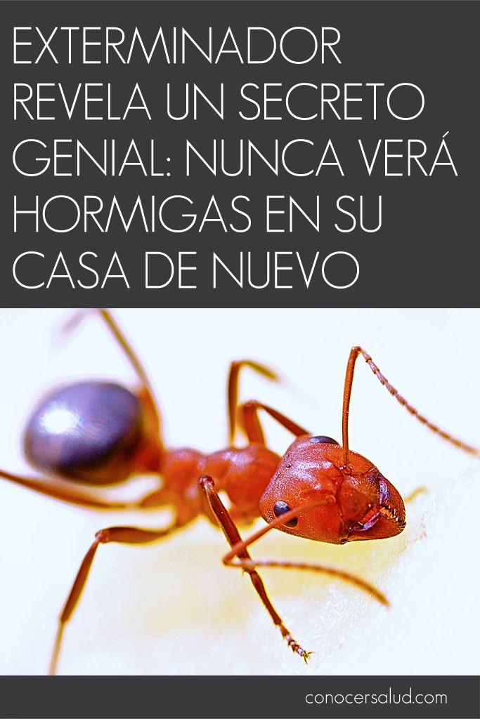 Exterminador revela un secreto genial: nunca verá hormigas en su casa de nuevo #salud
