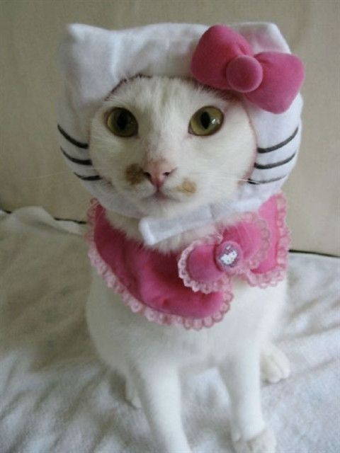 Cats dressed as Hello Kitty...poor kitties...