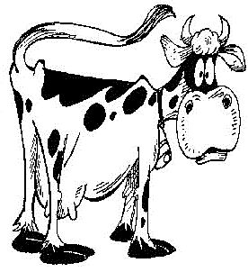 Cow Facts and Cow Trivia