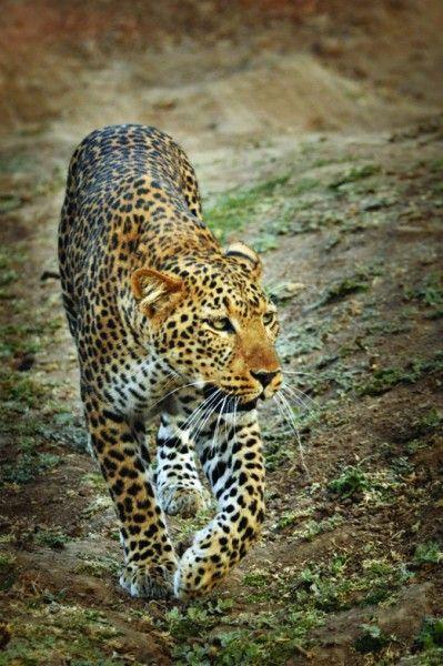 Africa Overland Tours: Kenya to Zambia   an African photo safari