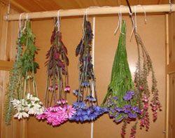 Técnicas de secado para conseguir flores secas
