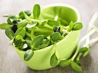 Nakličování semínek na misce, vatě i v pet-láhvi a domácí mladý ječmen