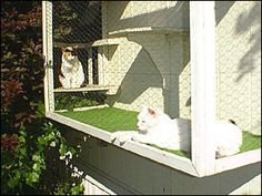 The Cat Terrace Window Cage - a kit that comes with plans and kitty screen door.
