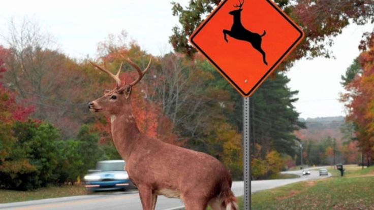Please Move The Deer Crossing, via YouTube. ohmygod i can't even with this i'm crying! =] lmao