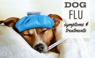 Dog Flu Symptoms and Treatments