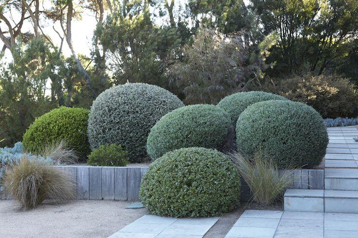 Does an Australian garden style exist? - GardenDrum