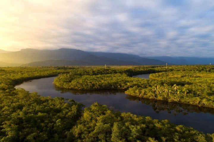 The Amazon Rainforest Is Home To More Than 80 000 Plant Species