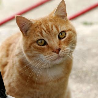 Pet Cat Insurance: Smart Buy or Wasteful Spending?  Remember to ADOPT NOT SHOP for your perfect pet!