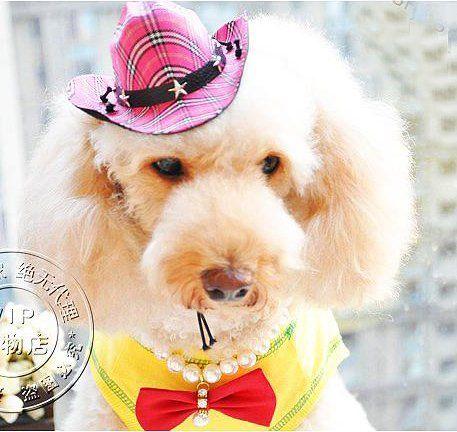 Вязание крючком цветок кошки шляпа шарф 2 шт. набор собака домашних животных свитер уход за волосами аксессуары желтый синий розовый