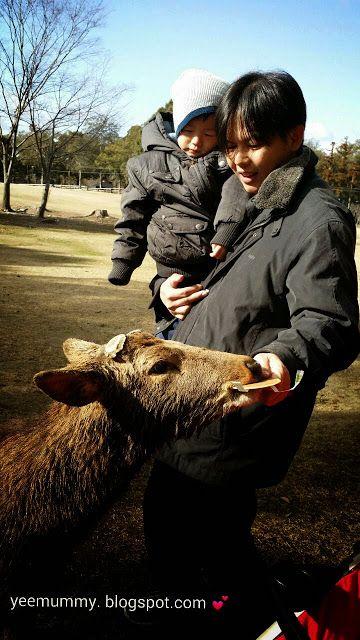 Yeemummy依玛密: Nara,Japan free n easy 6D5N 亲子奈良自由行 6天5夜 (Day 4 )