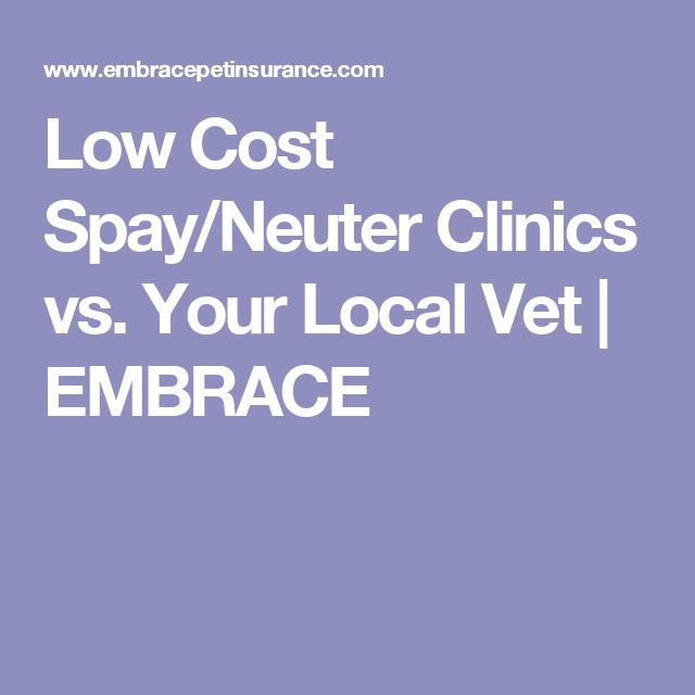 Low Cost Spay/Neuter Clinics vs. Your Local Vet | EMBRACE