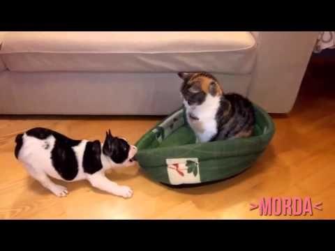 Funny animals 2015 || Śmieszne zwierzęta (by morda)