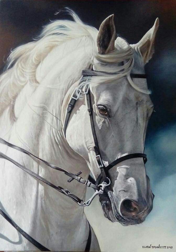Beautiful White Horse Art Horses Horse Art Beautiful Horses