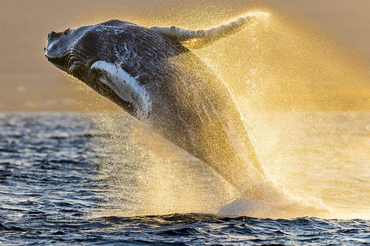 Ik heb gestemd op deze foto van National Geographic Fotowedstrijd, wat is jouw favoriet?