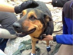 After this dog's owner abandoned her on a mountainside, volunteer workers climbed up to rescue her!